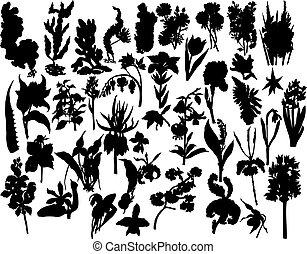 bayas, y, flores, siluetas