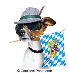 bayersk, hund, festival, öl