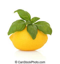 bazylia, cytryna