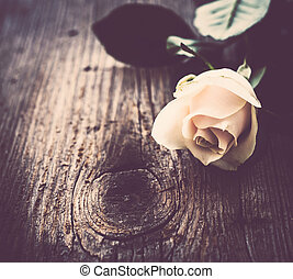 beżowy, róża