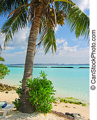 Beach and coco palm
