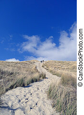 beach and dunes in blue sky Terschelling, The Netherlands