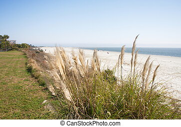 Beach and Ocean Beyond Sea Oats - An almost empty beach with...