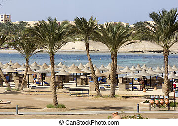 beach and ocean in marsa alam - Palm trees and buildings in ...