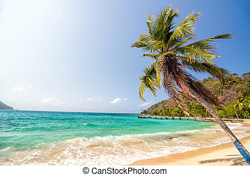 Beach and Palm Tree - White sand beach and beautiful palm...