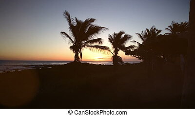 Beach and palm trees with sunset