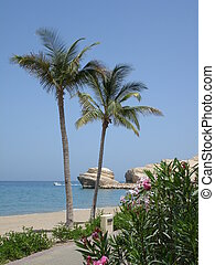 Beach and Palms Muscat