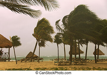 Beach and palms trees