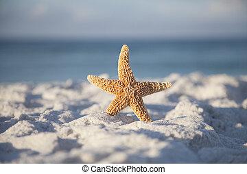 Beach and Starfish
