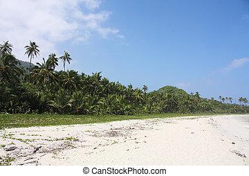 Beach and Tropical forest along the Caribbean Sea