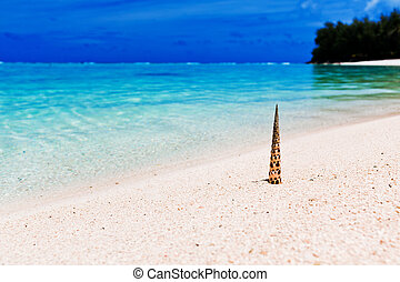 Beach and tropical shell on white sand