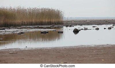 beach at low tide wetland