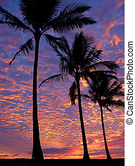 3 palm trees on the beach at sunset