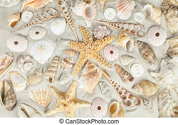 Beach background - Assorted seashells on a sandy beach...
