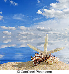 Beach background. Sea shells and starfish on a beach sand. In the background of sea and sky