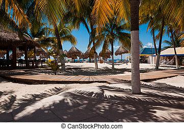 Beach bar with hammocks and palm trees