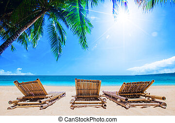 Beach beds under the palm trees on tropical beach, summer...