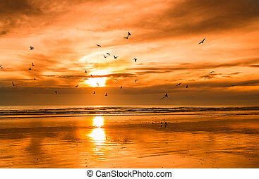 Beach Bird Sunset