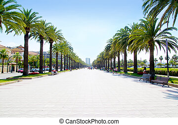 beach boulevard in Salou with palm trees in Tarragona Spain