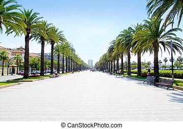 beach boulevard in Salou with palm trees in Tarragona Spain