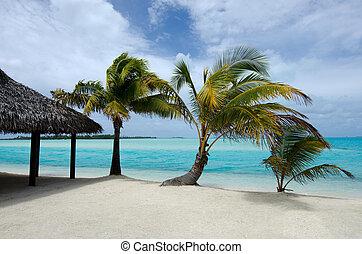 Beach bungalow on tropical pacific ocean Island