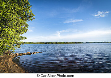 Beach by a large forest lake in the summer