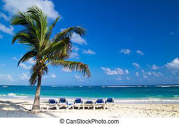 Beach chairs under palm - Beach chairs under a palm tree