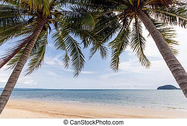 Beach coconut palm trees