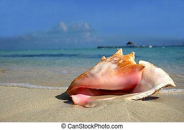 Conch on Tropical Beach