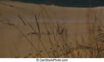 Beach Cover Destruction , Qld Island, Australia - Close-up...