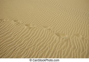 beach, desert, deserts, detail, details, dunes, landscapes