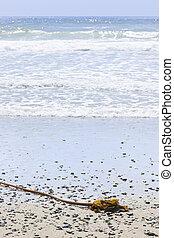Beach detail on Pacific ocean coast of Canada