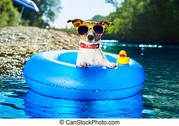 beach dog - dog on  blue air mattress  in water refreshing