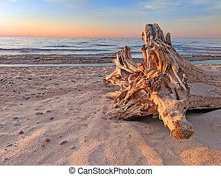 Beach Driftwood Sunset Michigan