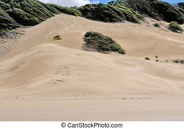 Beach dunes at East London South Africa - Beach sand dunes...