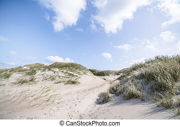 Beach dunes on a Scandinavian beach in the summer with lyme...