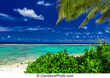 Beach during sunny day framed by palm trees, Rarotonga, Cook Islands
