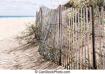 Beach Grass and Pickett Fence - Beach grass and dunes with...