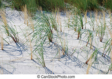 beach grass and sand at the dunes