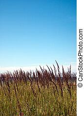 beach grass blue sky