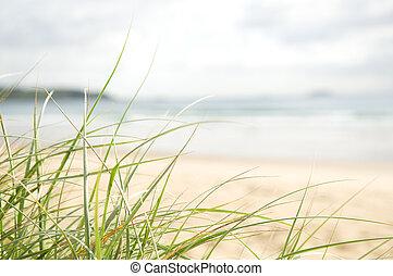 Focus on green grass overlooking sunny beach setting