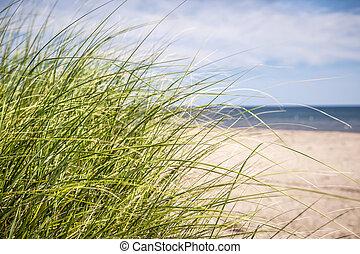 Grass growing on sandy beach at Atlantic coast of Prince Edward Island, Canada