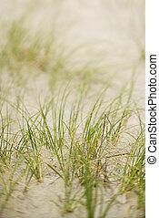 Beach grass in sand.