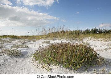 Beach Grass & Sky