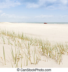 Beach Grass with 4WD