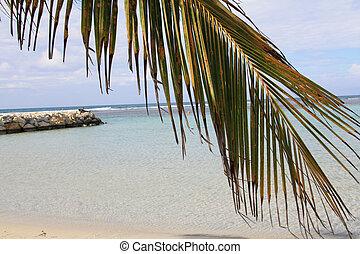 Beach - Guadeloupe (F.W.I.)