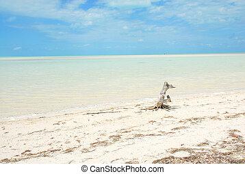 Beach Holbox Caribbean Sea Shore