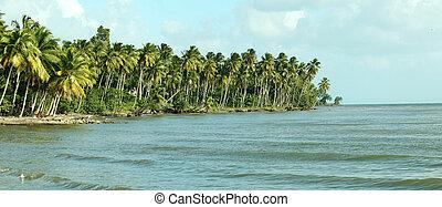 Beach in Caribbean
