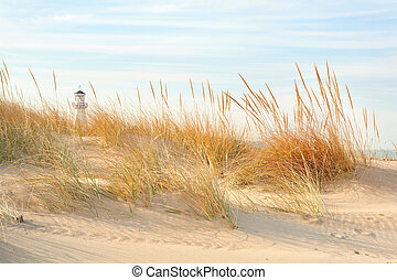 Beach in New Buffalo, Michigan - a close up of dune grass on...