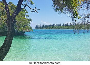 New Caledonia - Beach in New Caledonia